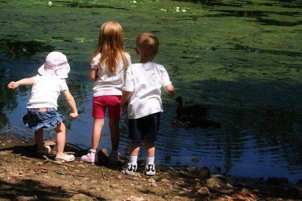 cousin camp feeding ducks